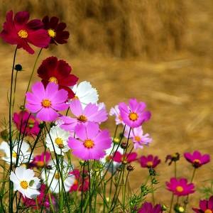 Красиви цветя